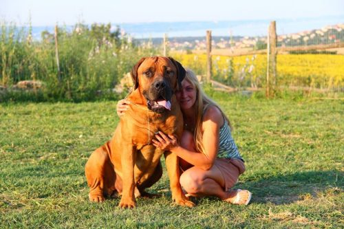 Boerboel Maglor with its owner